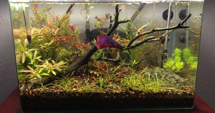 betta fish heater
