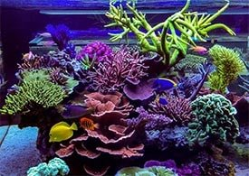 reef aquarium salt